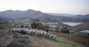 Challenge damns Lesotho water project